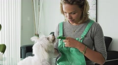 Woman Cleaning Dog Mouth Teeth With Toothbrush Stock Footage