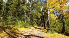 Eath road in autumn forest Stock Footage