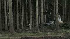 Forestry: Harvester cutting tree Stock Footage
