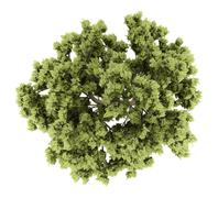 Top view of white ash tree isolated on white background. 3d illustration Stock Illustration