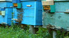 Bees fly into the hive entrance is bringing pollen Stock Footage
