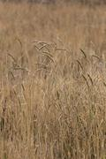 dry grass in agricultural areas. - stock photo