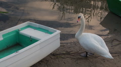 Swan standing next to a boat. Stock Footage