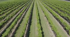 Aerial of vineyard in  hawkes bay, New Zealand Stock Footage