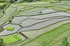 rice paddy terrace fields  Philippines - stock photo