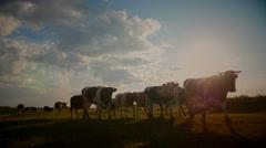 Farmland summer scene in sunset Stock Footage