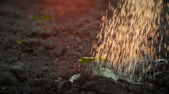 Watering a young plant growing trough dead ground Stock Footage