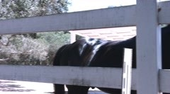 Horse Ranch with Horses in a Fence Stock Footage