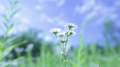Beautiful summer garden. The plants swaying in the win Stock Footage