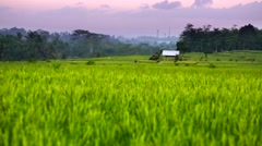 House in rice fields at sunset, Bali. Indonesia - stock footage