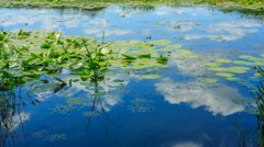Pond with water lilies in a summer day Stock Footage