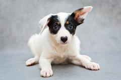 Little white puppy Stock Photos