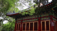 Branches of trees against the background of China Beijing Forbidden city Stock Footage