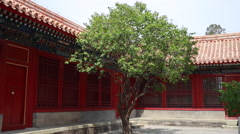 Lonely tree in the courtyard in China Beijing Forbidden city Stock Footage
