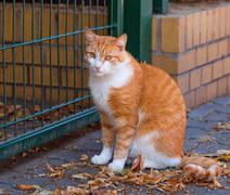 Adult domestic cat - stock photo