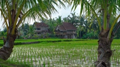 Rice Paddies and Palm Trees on a Farm in Bali, Indonesia Stock Footage