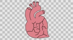 Heart medical sketch illustration hand drawn animation transparent - stock footage