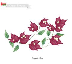 Red Bougainvillea Flowers, The Native Flower of Oman Stock Illustration