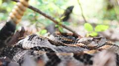 Timber Rattlesnake Closeup Stock Footage