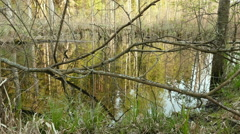 Tree branches in pond in forest. Smooth slider shot. Clean and bright daytime. Stock Footage