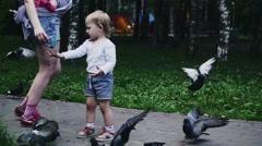 Blonde little boy feeding doves by sunflower seeds in summer park. Childhood - stock footage