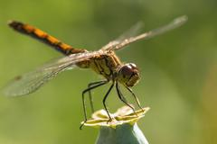 Dragonfly insect branch Kuvituskuvat