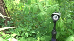 Outdoor wildlife camera wireless secuirty Stock Footage