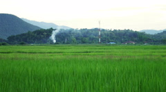 Landscape of rice farm in Thailand-4K - stock footage