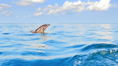 Beautiful dolphin jumps out of blue water in tropical sea Stock Footage