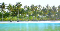 Many coconut palm trees grow on beach. Myanmar travel destination background - stock footage