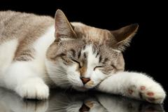 Cute White Cat with closed eyes Dreaming Isolated Black Background - stock photo