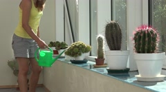 woman watering cactus plant with green watering can in conservatory. 4K - stock footage