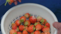 Washing fresh strawberries close up in the garden Stock Footage