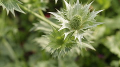 Green plant close up in the garden Stock Footage