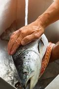 Male hands wash big fish. Stock Photos