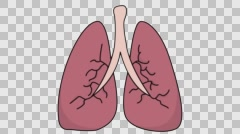 Lungs medical sketch illustration hand drawn animation transparent Stock Footage