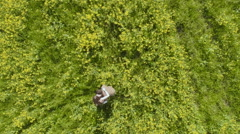 Aerial View. Man rotates Woman in rapeseed field Stock Footage
