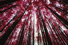 Forest canopy and evergreen tree Stock Photos