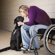 Woman wheelchair user and assistance dog Stock Photos