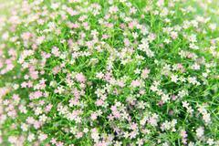 beautiful wildflowers field texture - stock photo
