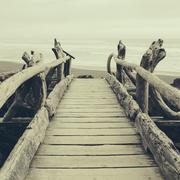 Driftwood log bridge Stock Photos