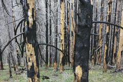 Recovering forest after extensive fire damage Stock Photos