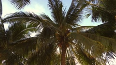 Looking up at Palm Trees on the beach. Tropical morning scene. Stock Footage