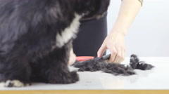 Person cleaning clipped dog hair from table 4K Stock Footage