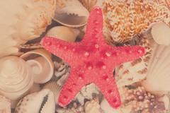 Pile of seashells with starfuish Stock Photos
