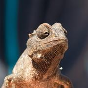 Small Chameleon sitting in a bush - stock photo
