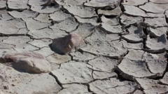 Arid land during drought Arkistovideo