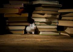 Rats and books. Stock Photos