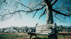 Ice Covered Tree and Bench in Park - stock footage