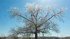 Ice Covered Tree Wide Angle Centered - stock footage
